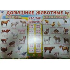 "Плакат ""Домашние животные"" Ed-pl-0005r"