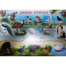 """Плакат """"Дикие и Домашние Птицы"""" Ed-PL-0002r"""